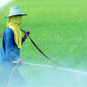 Pesticide Residues Analysis
