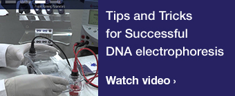 Tips and Tricks for Successful DNA electrophoresis video