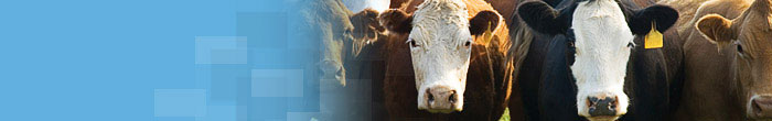 Animal Diseases Bovine / Cattle